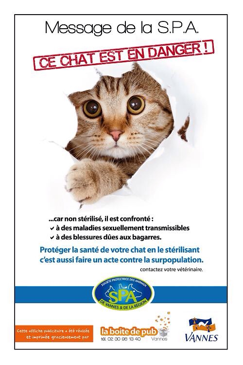 Faire stériliser son chat